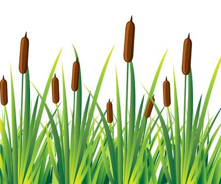 471 Cattail Cliparts, Stock Vector And Royalty Free Cattail.