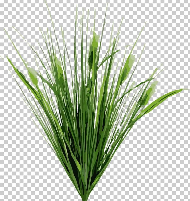 Dietes Typha Latifolia Cat Tail Pond Road Plant PNG, Clipart, Assets.