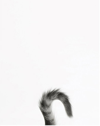 Cat Tail Png (110+ images in Collection) Page 1.