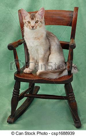 Stock Photographs of cat on rocking chair.