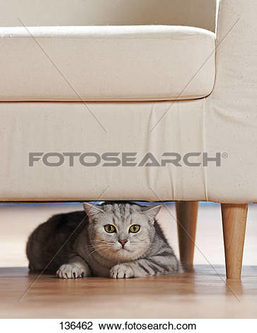 cat under the chair clipart #16