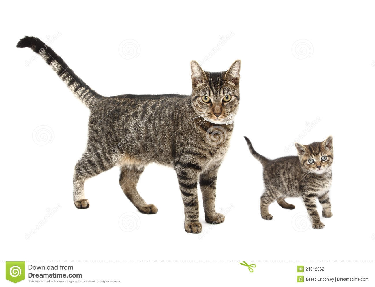 Cat With Kitten Clipart.