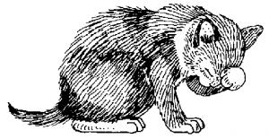 Cat 6 Clip Art Download.