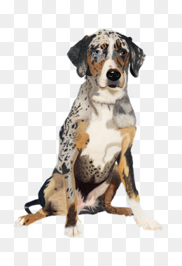 Catahoula Cur PNG and Catahoula Cur Transparent Clipart Free.