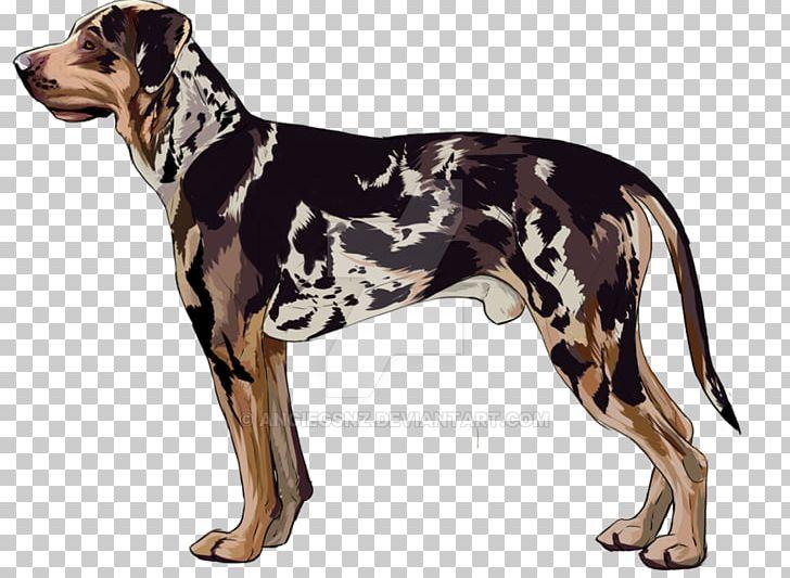Dog Breed Catahoula Cur English Foxhound Great Dane American.