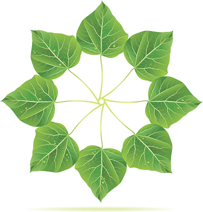 Catalpa Clip Art, Vector Images & Illustrations.