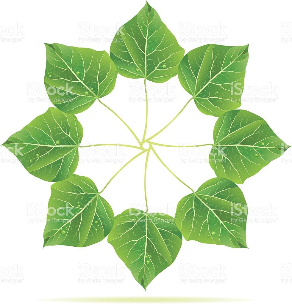 Catalpa Tree Leaf Ring stock vector art 118271128.