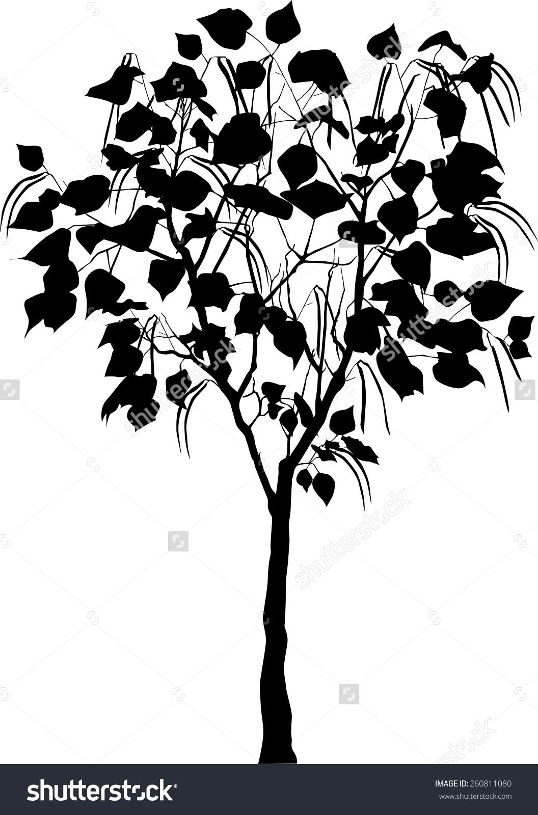 Catalpa Tree Stock Vector 260811080.