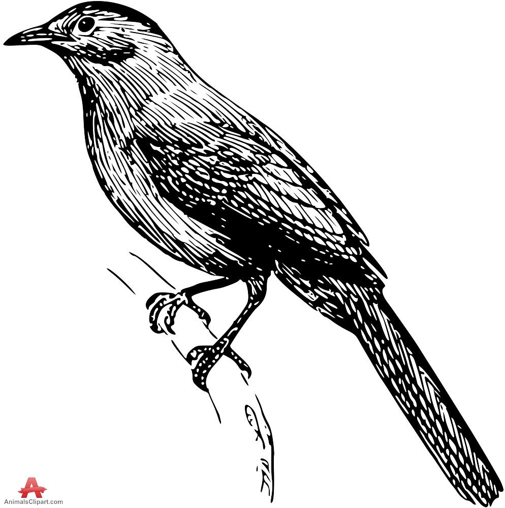 Catbird Drawing Clipart.