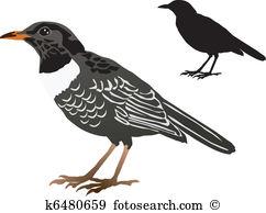 Catbird Clip Art and Illustration. 6 catbird clipart vector EPS.