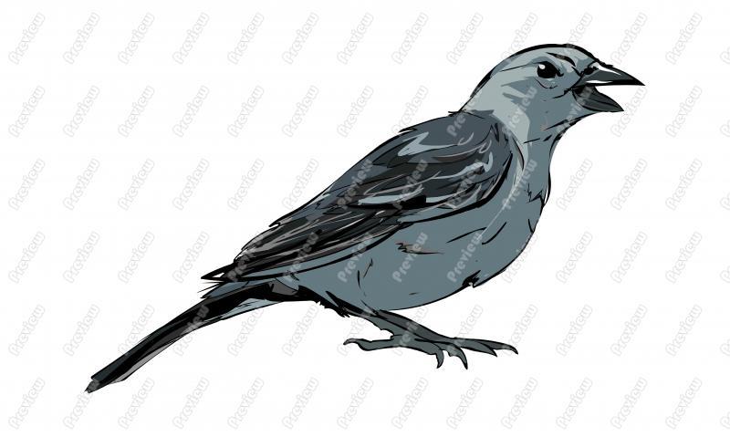 Realistic Gray Catbird Character Clip Art.