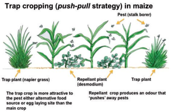 Pest and Disease Management in Organic Agriculture.