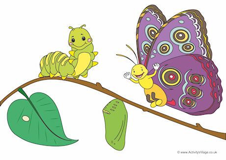 Caterpillar To Butterfly Cycle Clipart.