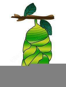 Caterpillar Eating Clipart.