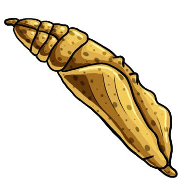 Pupa Clipart Flashcard Letter P Is For Pupa Butterfly Caterpillar.