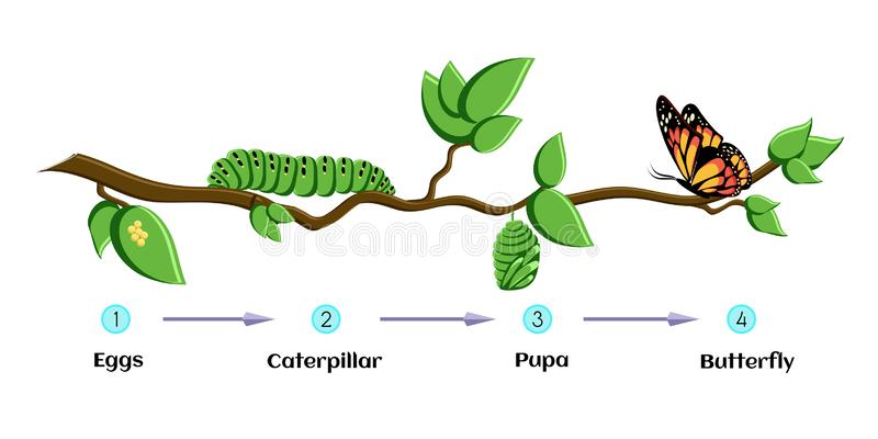 Caterpillar Cocoon Stock Illustrations.