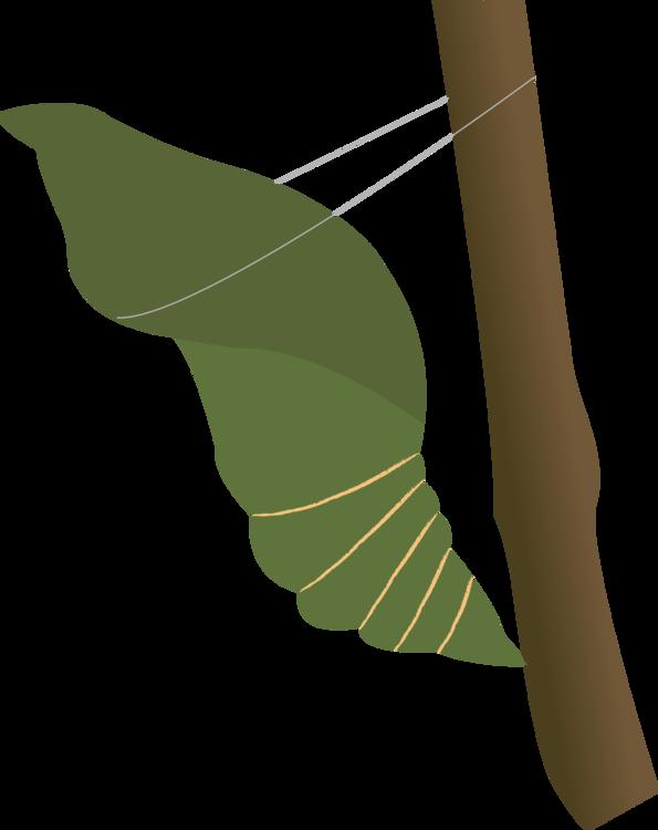 Botany,Plant,Leaf Vector Clipart.