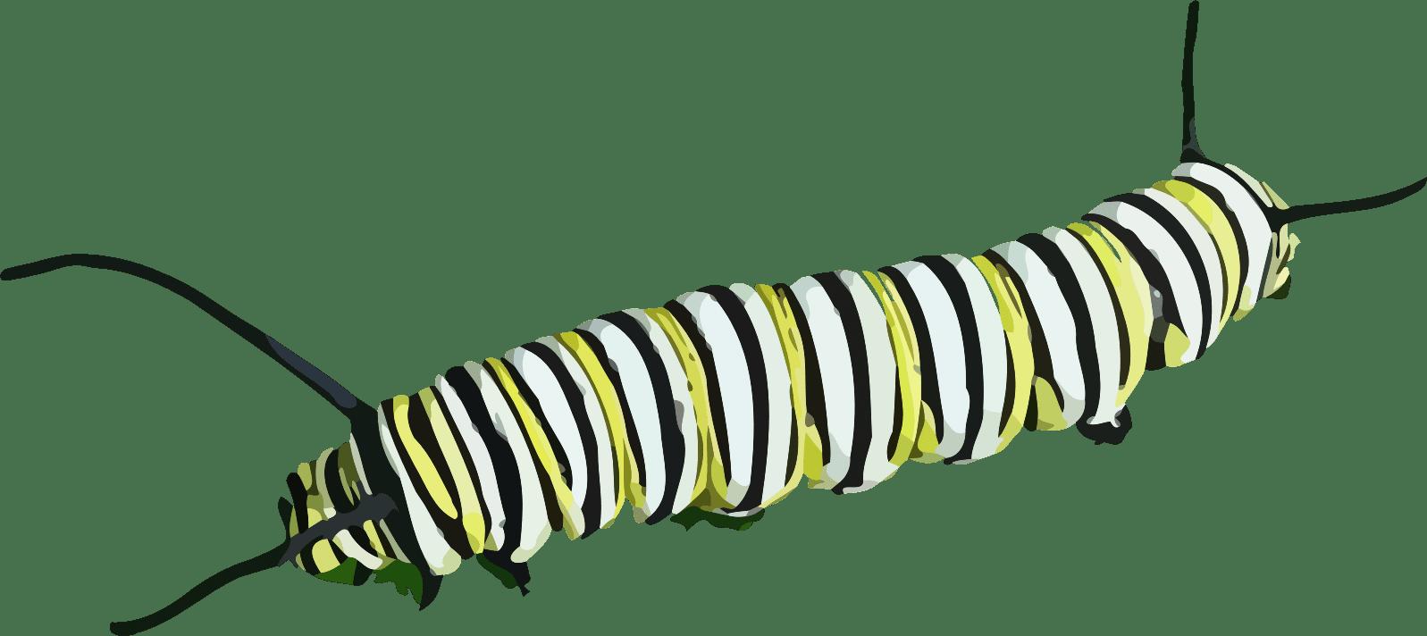 Caterpillar Clipart transparent PNG.