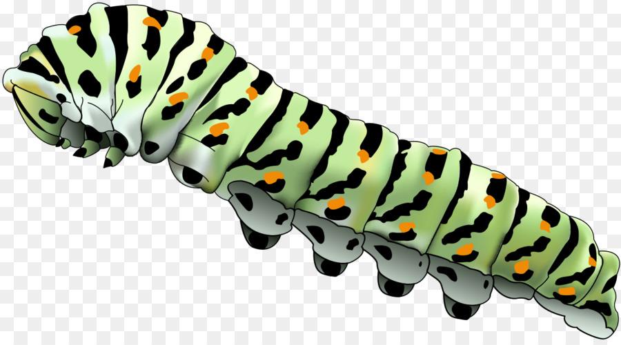 Caterpillar Cartoon png download.