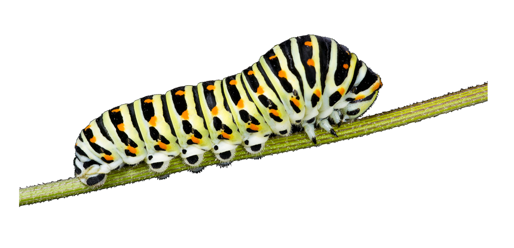 Caterpillar insects PNG images free download.