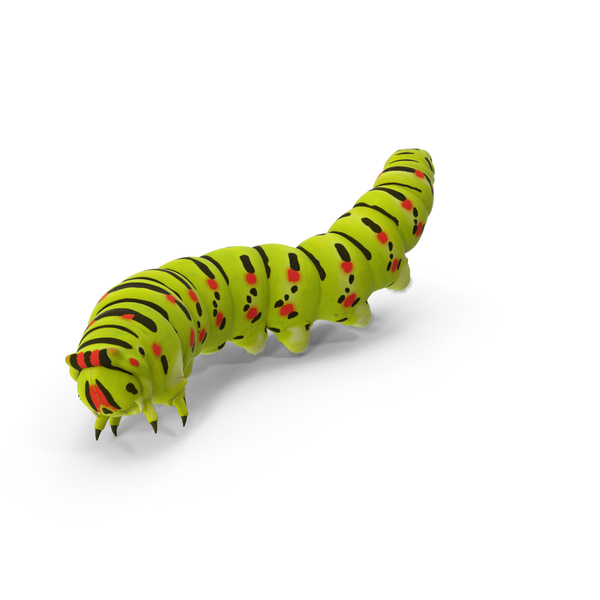Caterpillar PNG Images & PSDs for Download.