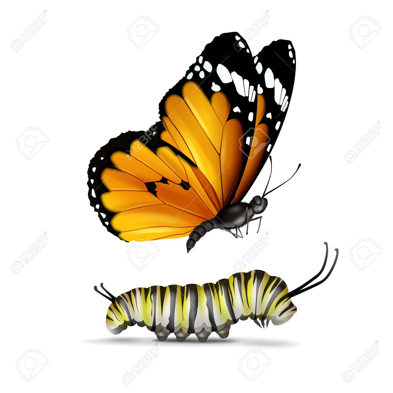 Vector realistic Plain Tiger or African Monarch butterfly and...
