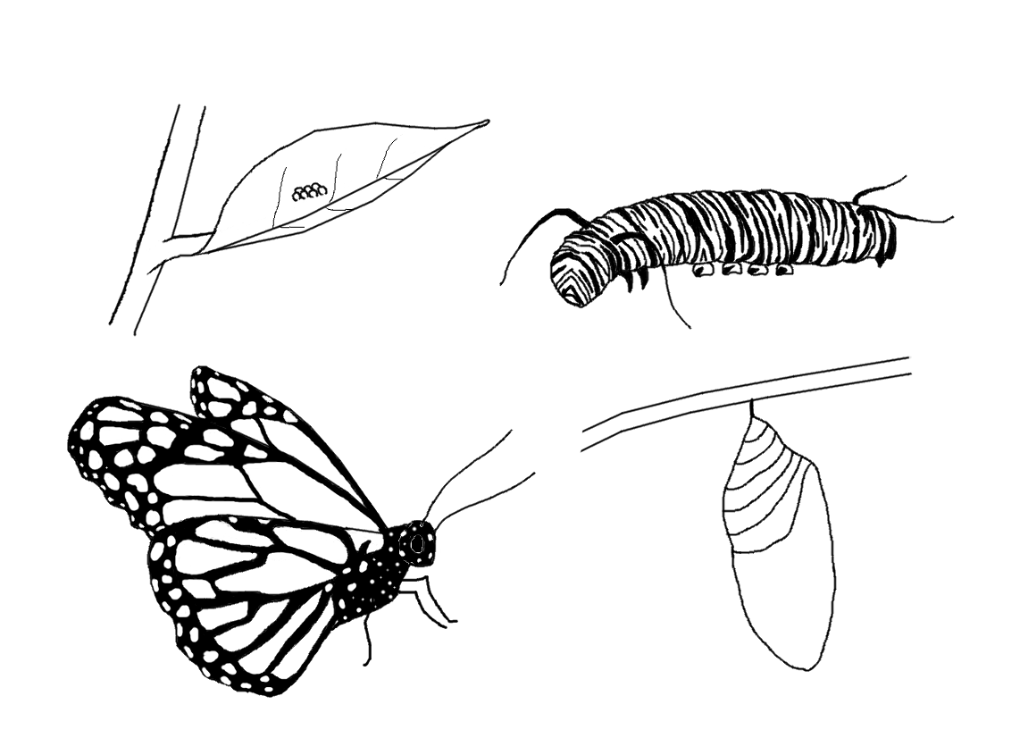 Coloring Page Butterfly Monarch Christian.