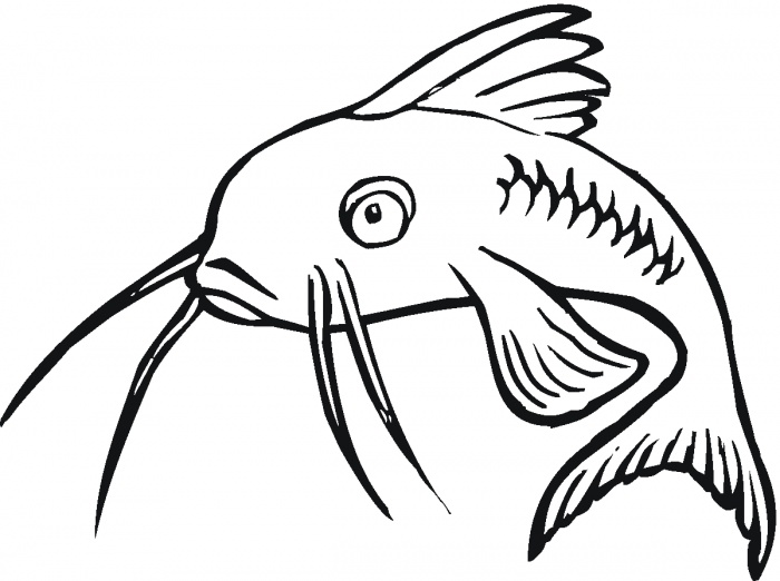 Free Catfish Clipart Black And White, Download Free Clip Art, Free.