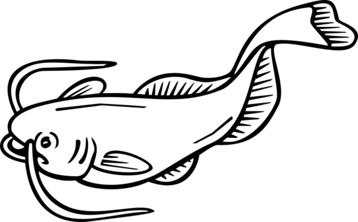 Catfish clipart black and white 5 » Clipart Station.