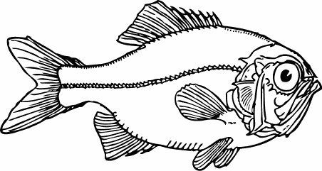 Free Fish Clipart, 3 pages of free to use images.