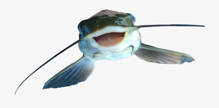 Catfish Png File.