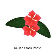 Catharanthus roseus Clipart Vector Graphics. 8 Catharanthus roseus.