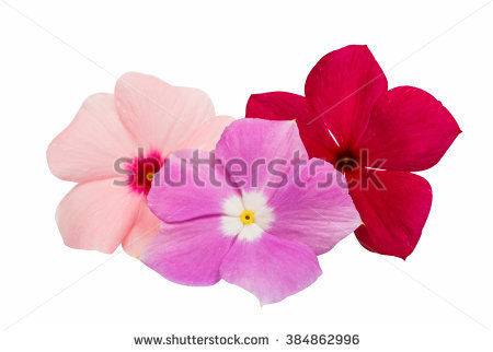 Vinca Stock Vectors & Vector Clip Art.