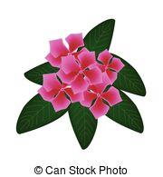 Catharanthus roseus Clipart Vector Graphics. 8 Catharanthus roseus.