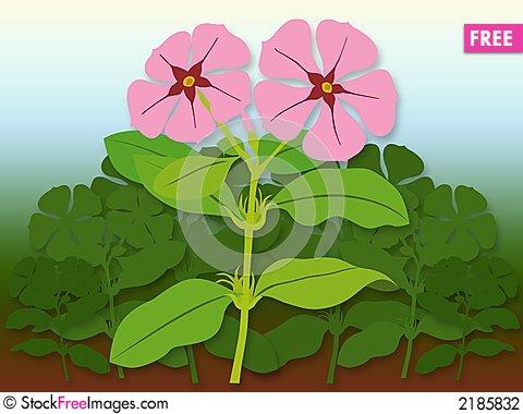 Catharanthus Roseus.