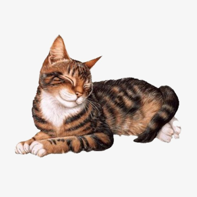 Cat Nap Png & Free Cat Nap.png Transparent Images #15118.