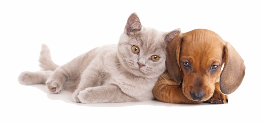 And Horse Sitting Pet Dog Together Cat Clipart.