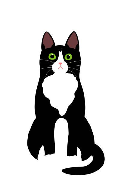 Best Tuxedo Cats Illustrations, Royalty.