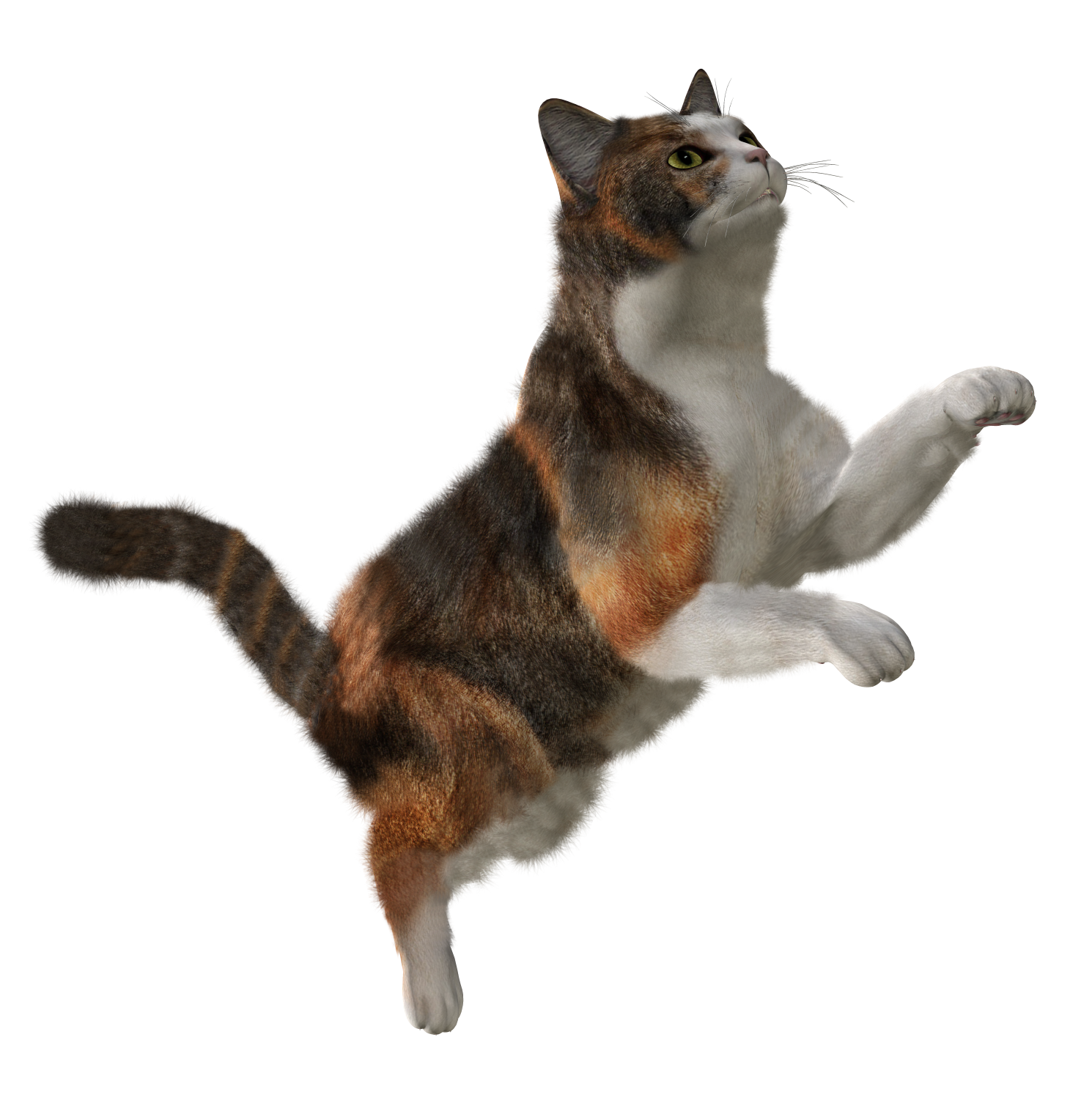 Cats PNG Picture.