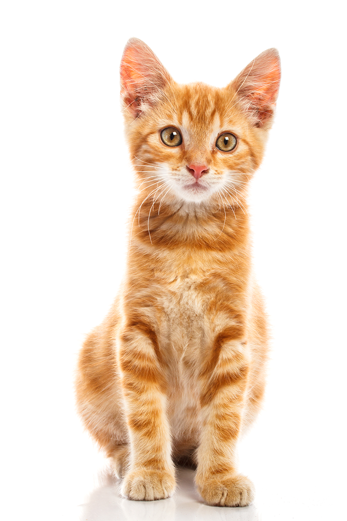 Baby Cat PNG Transparent Baby Cat.PNG Images..