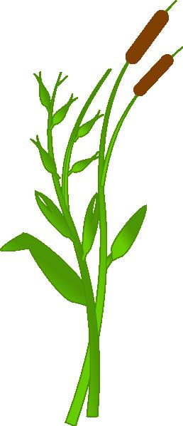 Cat tail plant clip art.