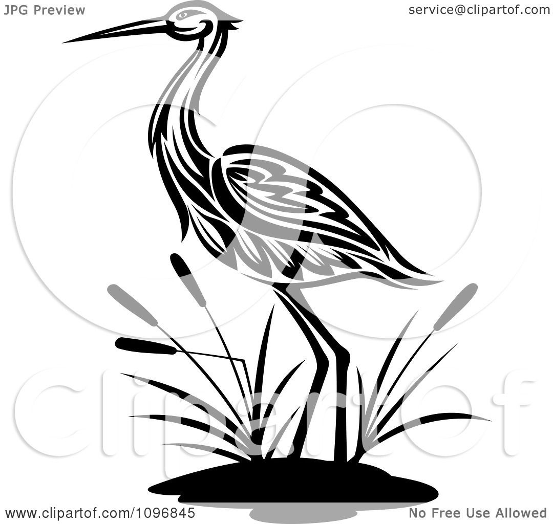Clipart Black And White Crane Wading By Cattails.