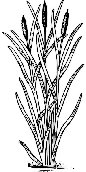 Similiar Cattail Clip Art Keywords.