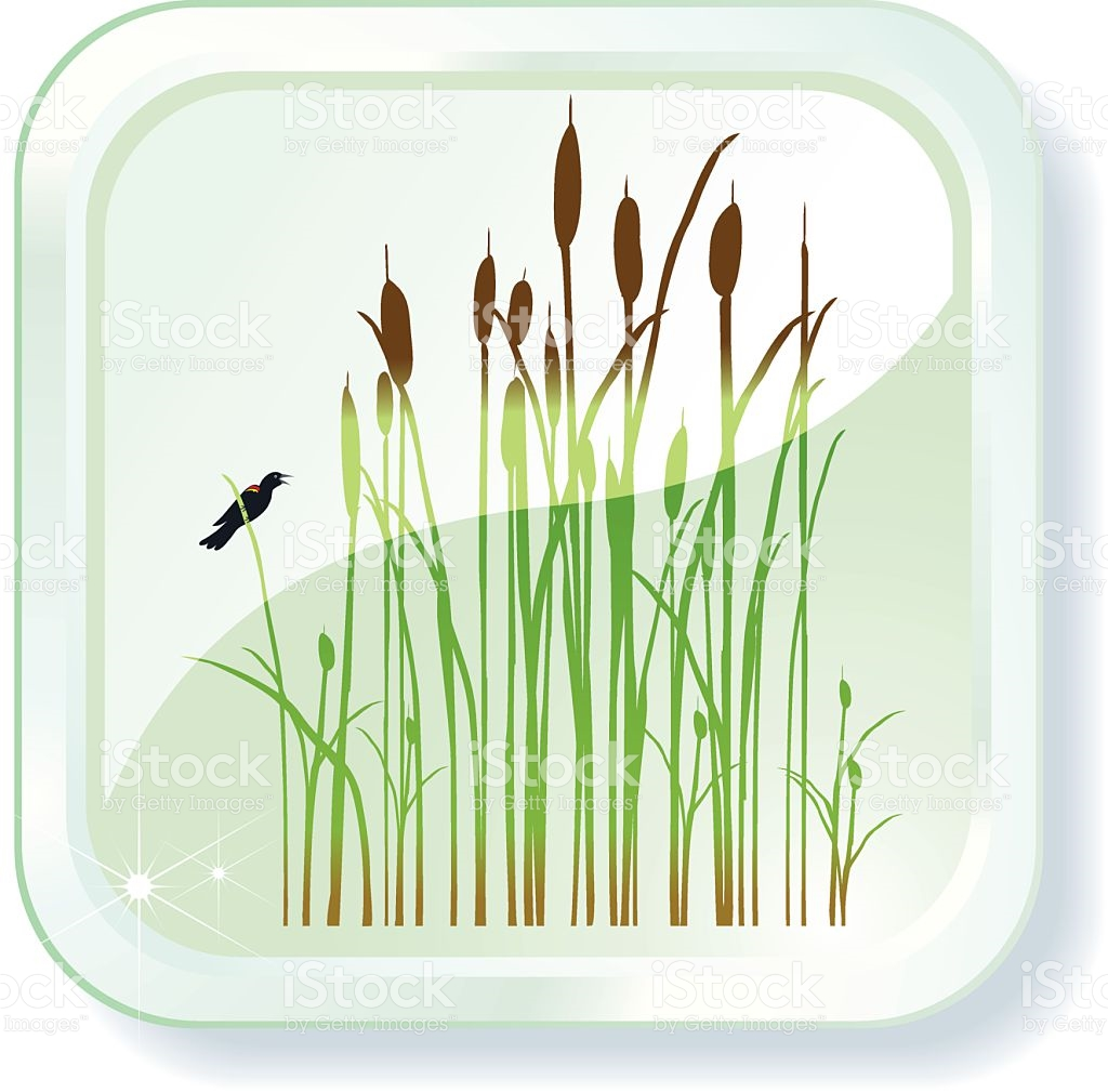 Cattails Icon stock vector art 115048384.