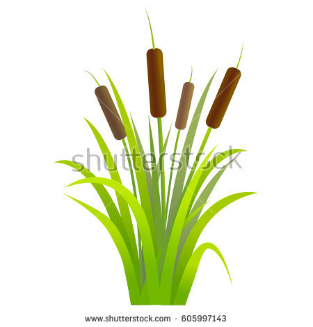 Cattail Stock Images, Royalty.