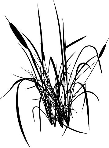 Silhouette Of Cattail Clip Art, Vector Images.