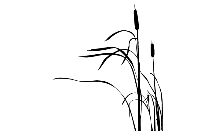 Cattail Silhouette at GetDrawings.com.