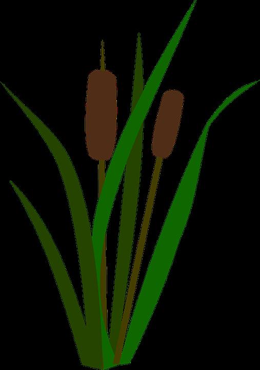 Cattails Bulrush Marsh.