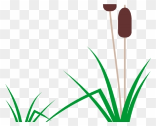 Free PNG Cattails Clip Art Download.
