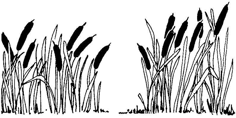 Cattails in Pond Clip Art.